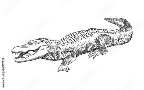 Hand drawn pencil graphics, crocodile, alligator, croc Canvas Print