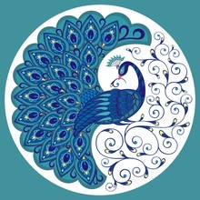 Peacock Drawing Fantasy Bird