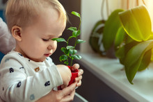 Cute Little Caucasian Toddler Boy With Mother Smiling And Having Fun Holding Pot With Planted Flower Near Window Sill At Home. Flower And Nature Care Concept. Children And Family Happy Childhood