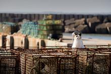 Um Gato Branco Junto A Um Porto De Mar.
