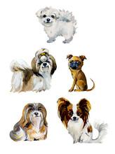 Cartoon Small Dogs. Gouache Hand Drawn Illustration