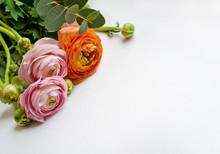 Beautiful Ranunculus Flowers  On White Background. Pink And Orange Flowers.