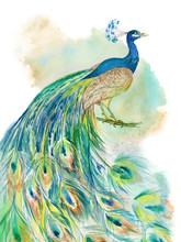 Colorful Peacock On White Background For Print And Wallpaper Design. Bird Hand Drawn Beautiful Watercolor Illustration. Turquoise, Blue, Green Feather Ethnic Watercolour
