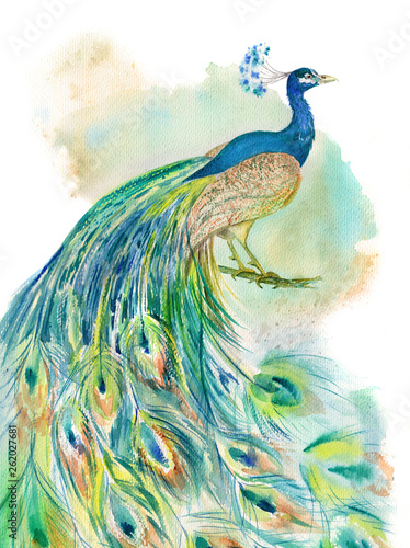 kolorowy-paw-na-bialym-tle-dla-druku-i-tapetowego-projekta-ptak-recznie-rysowane-piekna-ilustracja-akwarela-akwarela-etniczna-turkusowa-niebieska-zielona-z-pior