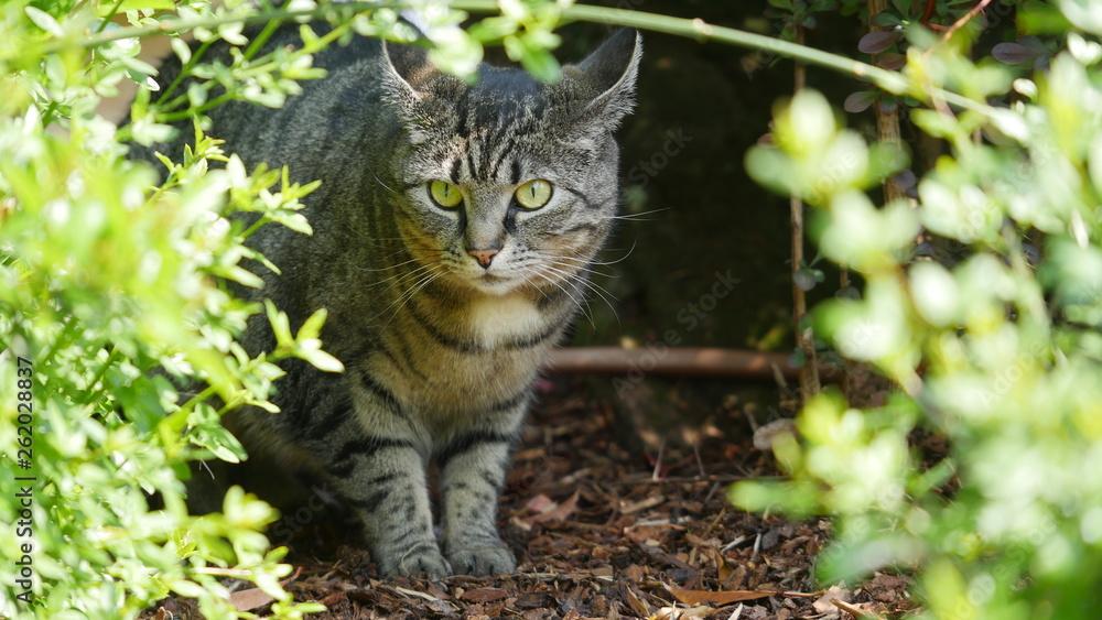 Fototapeta Katze im Gebüsch