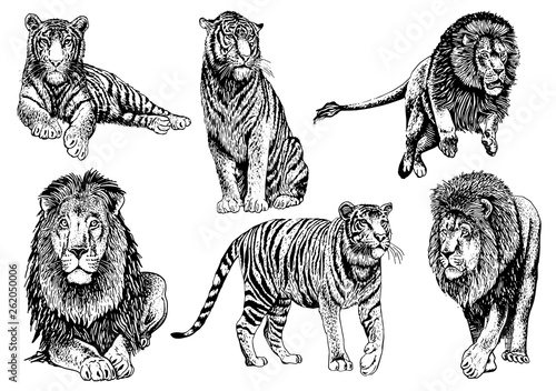 Graphical set of wild cats,lion and tiger isolated on white background,vector il Canvas Print