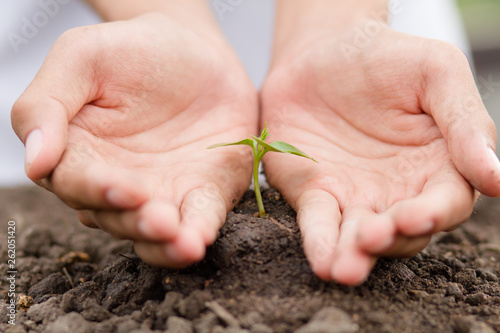 Spoed Foto op Canvas Planten Hand protecting small tree that grow on soil