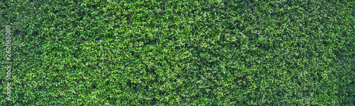 fototapeta na ścianę Fresh green leaves vertical copy space background Summer tropical for use in the design banner.