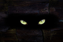 The Yellow Eyes Of The Beast Sparkle In A Dark Hole In The Trunk Of A Tree The Concept Of Mystical Nature