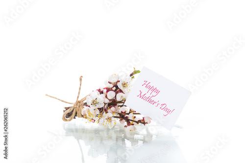Fototapeta Branch with apricot flowers on a white background obraz na płótnie