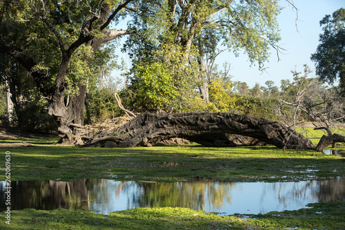 Fotografie, Obraz  Pond with Downed Branch and Reflections