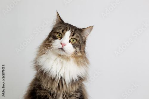 Obraz na płótnie Katze