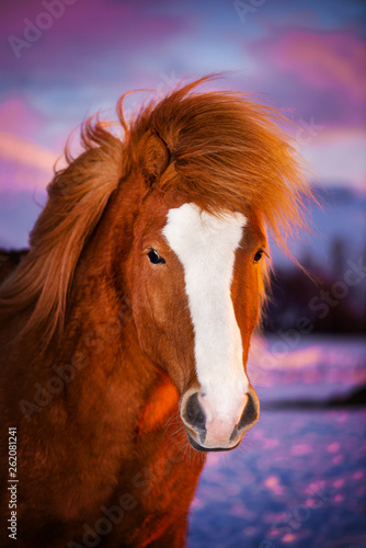 Beautiful red horse with long mane Wallpaper Mural
