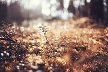 Moss Autumn Forest / Landscape Of Nature In Autumn Forest Macro