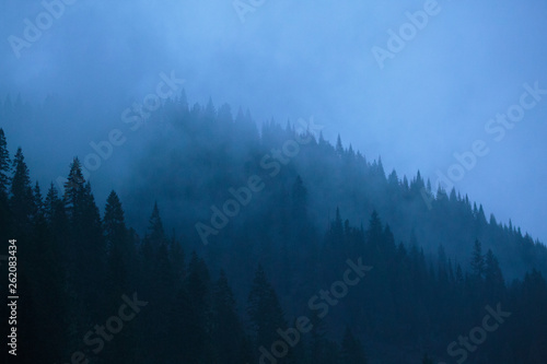 Poster Morning with fog Early morning blue tones and foggy forests along the Lochsa River in Idaho.
