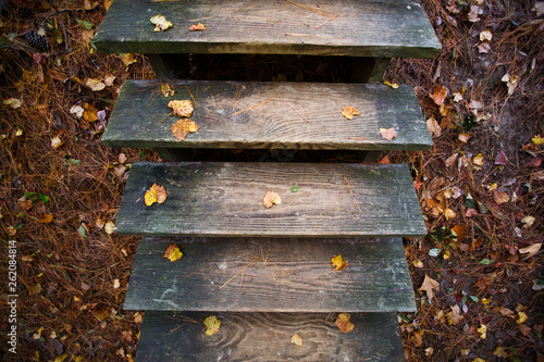 A wooden staircase along the Sweetgum Swamp Trail. - 262084814