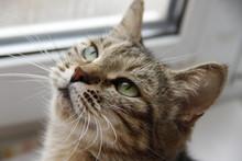 Good Grey Cat
