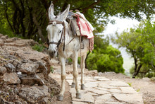Gray Donkey Waiting For The Rider. Descent Along The Mountain Path. Summer Trip To Greece. Beast Of Burden.