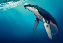 Whale Under Water Realistic Illustration Of A Copis. Humpback Whale In The Open Sea.