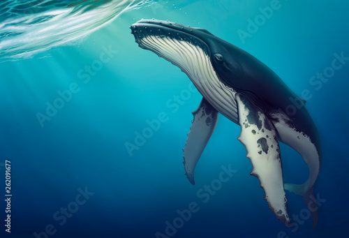Obraz na plátne Whale under water realistic illustration of a copis
