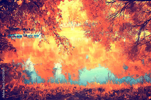 Poster Corail autumn forest landscape / yellow forest, trees and leaves October landscape in the park