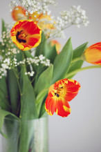 Red And Yellow Tulips And Gypsophila In A Vase