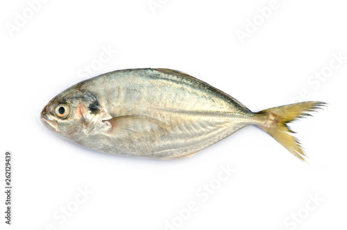 Fotografija  Yellow Tail Scad fish, Decapterus fish, on white background