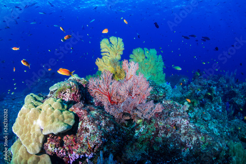 Poster Coral reefs Large, delicate Sea Fans on a tropical coral reef in Thailand