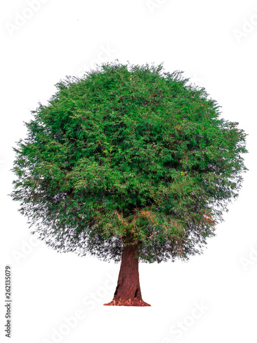Fotografia, Obraz  Isolated natural trees on white background high resolution for graphic decoration