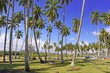 Coconut trees on tropical beach with blue sky background