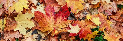 Foto auf Leinwand Herbst Misty autumn park, beautiful october morning.