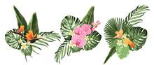 Tropical Plants, Philodendron Monstera Palm Leaves,orchid Strelitzia Flowers Set