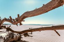 Log On The Beach, Snag, Tree