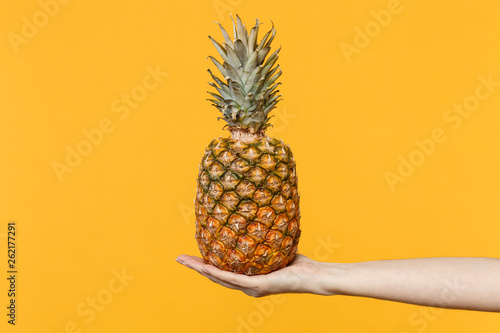 Close up cropped photo of female hold in hands fresh ripe pineapple fruit isolated on yellow orange wall background in studio. Proper healthy nutrition, vitamins concept. Mock up copy space. - 262177291