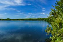 Paurotis Pond In Everglades National Park In Florida, United States