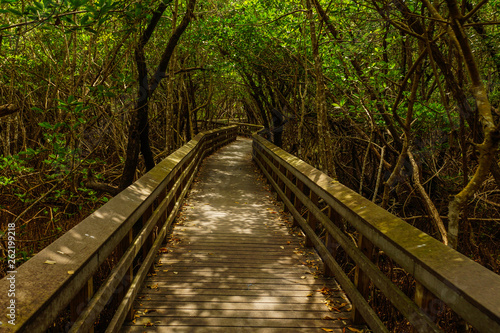 Photo  West Lake Trail in Everglades National Park in Florida, United States