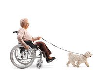 Elderly Woman In A Wheelchair With A Dog On A Leash