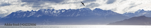 Fotomural A lone albatross flying over the Beagle Channel, Patagonia