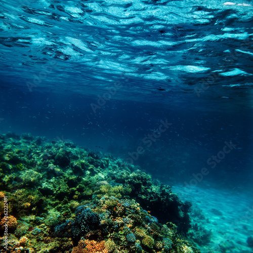 Canvas Prints Textures a Underwater coral reef on the red sea
