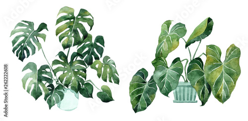 Poster Aquarel Natuur Watercolor image with tropical leaves and leaves of indoor plants. Home plant in pots. Greenery. Juicy. Floral design element. Perfect for invitations, cards, prints, posters.