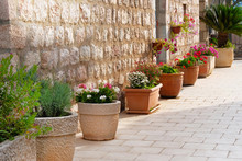 Pots With Bushes Of Blooming P...
