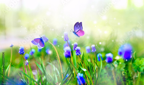 Photo sur Aluminium Pres, Marais Violet Muscari flowers and surprisingly beautiful colorful butterfly in rays of summer sunlight in spring summer outdoors on nature macro, soft focus. Atmospheric photo, gentle artistic image.