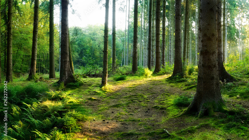 Fototapety, obrazy: Beautiful forest in spring with bright sunlight shining through the trees