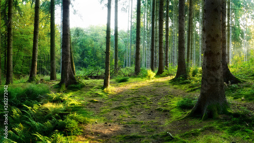 Tuinposter Bomen Beautiful forest in spring with bright sunlight shining through the trees