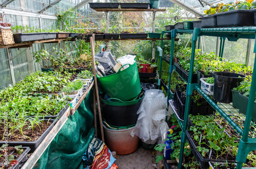 Seedlings And Young Plants Growing In Seed Trays And Old