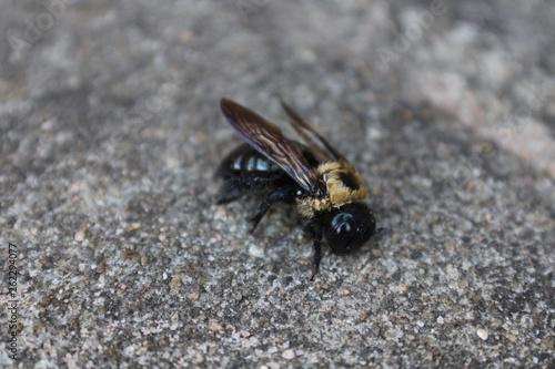 Fotografie, Obraz  fly on a background