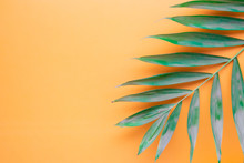 Tropical Palm Leaves Pattern On Orange Background.  Flat Lay, Top View