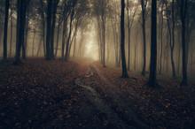 Dark Autumn Forest Road In Golden Sunset Light