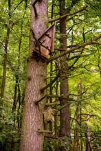 Okres Lęgowy. Budka Dla Ptaków Na Drzewie W Lesie