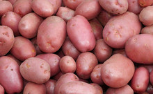 Red Potatoes A Very Valuable Quality